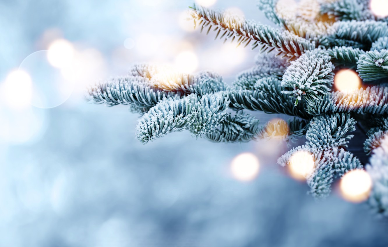 Photo wallpaper winter, snow, branches, tree, frost, winter, snow, bokeh, fir tree