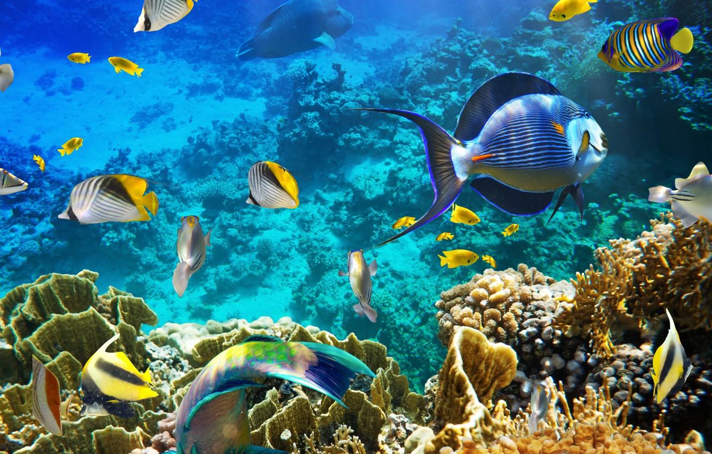 Photo wallpaper water, fish, depth