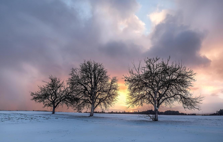 Photo wallpaper winter, field, trees