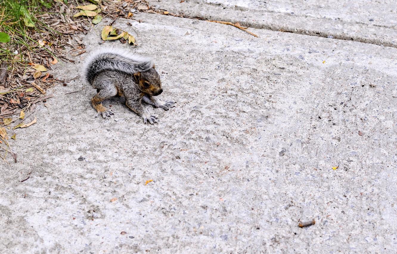 Photo wallpaper animal, protein, tail