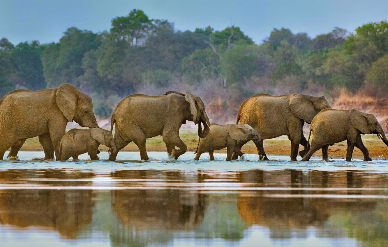 Photo wallpaper river, Africa, elephants, the herd, Luangwa, Zambia