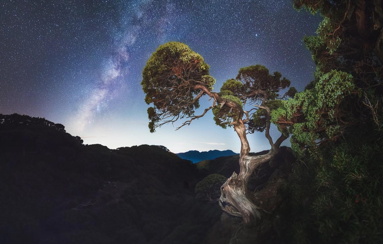 Photo wallpaper the sky, stars, trees, night, the milky way