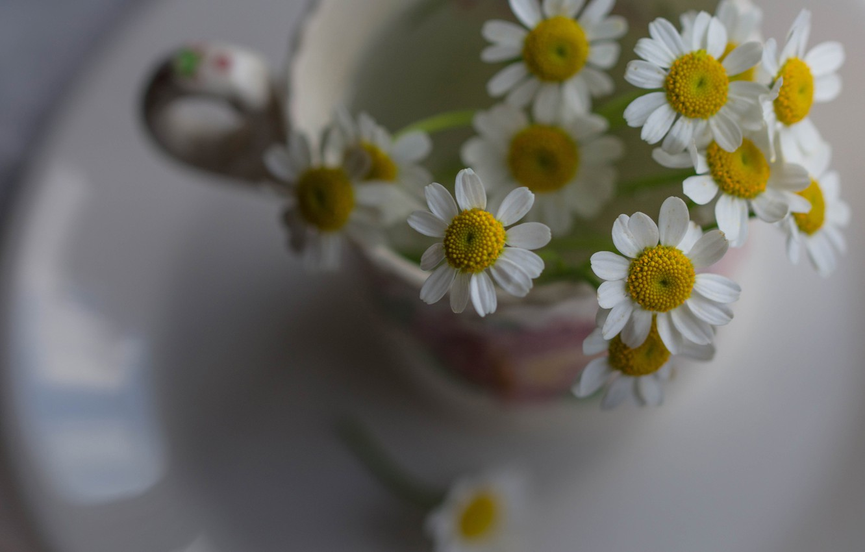 Photo wallpaper chamomile, mug, a bunch, bokeh
