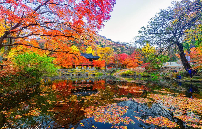 Wallpaper Pond Gazebo South Korea The Colors Of Autumn