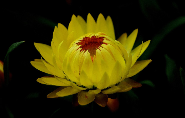 Photo wallpaper flower, nature, background, petals