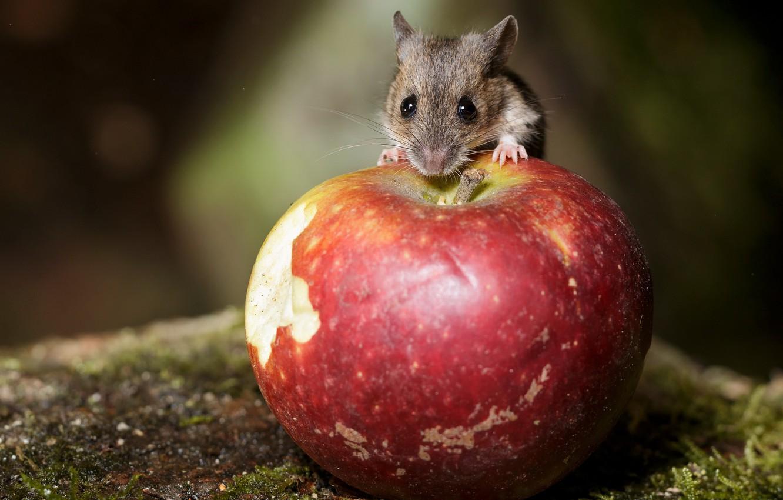 Photo wallpaper nature, Apple, mouse
