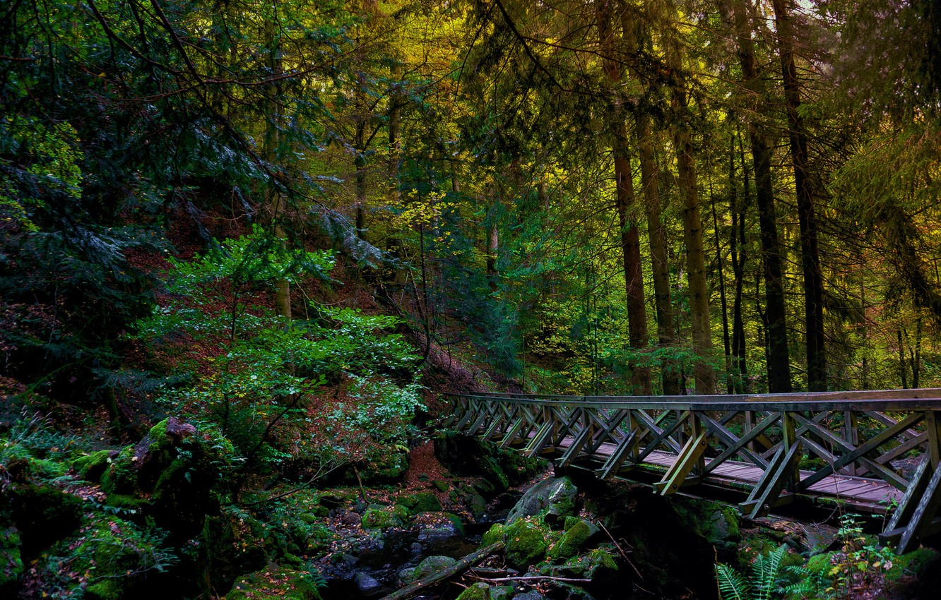 Photo wallpaper forest, bridge, river, hdr, the bridge over the river in the forest, bridge in the …