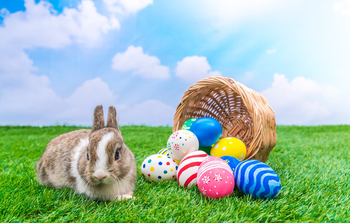 Photo wallpaper holiday, basket, rabbit, Easter, eggs dyed