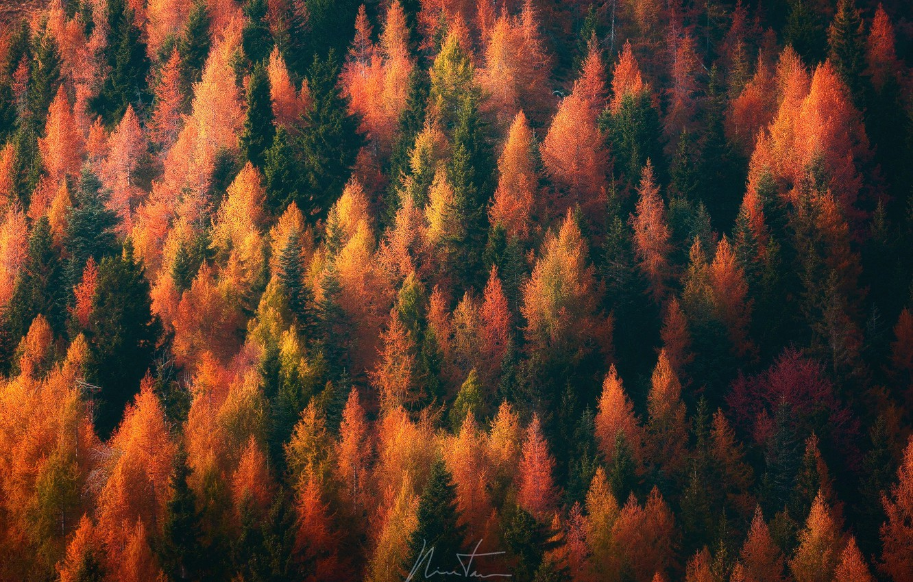 Photo wallpaper autumn, forest, trees, nature, paint