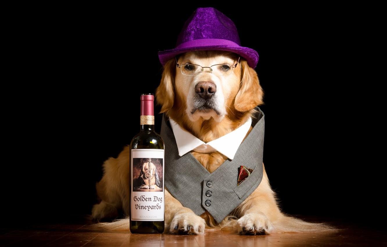 Photo wallpaper bottle, dog, hat