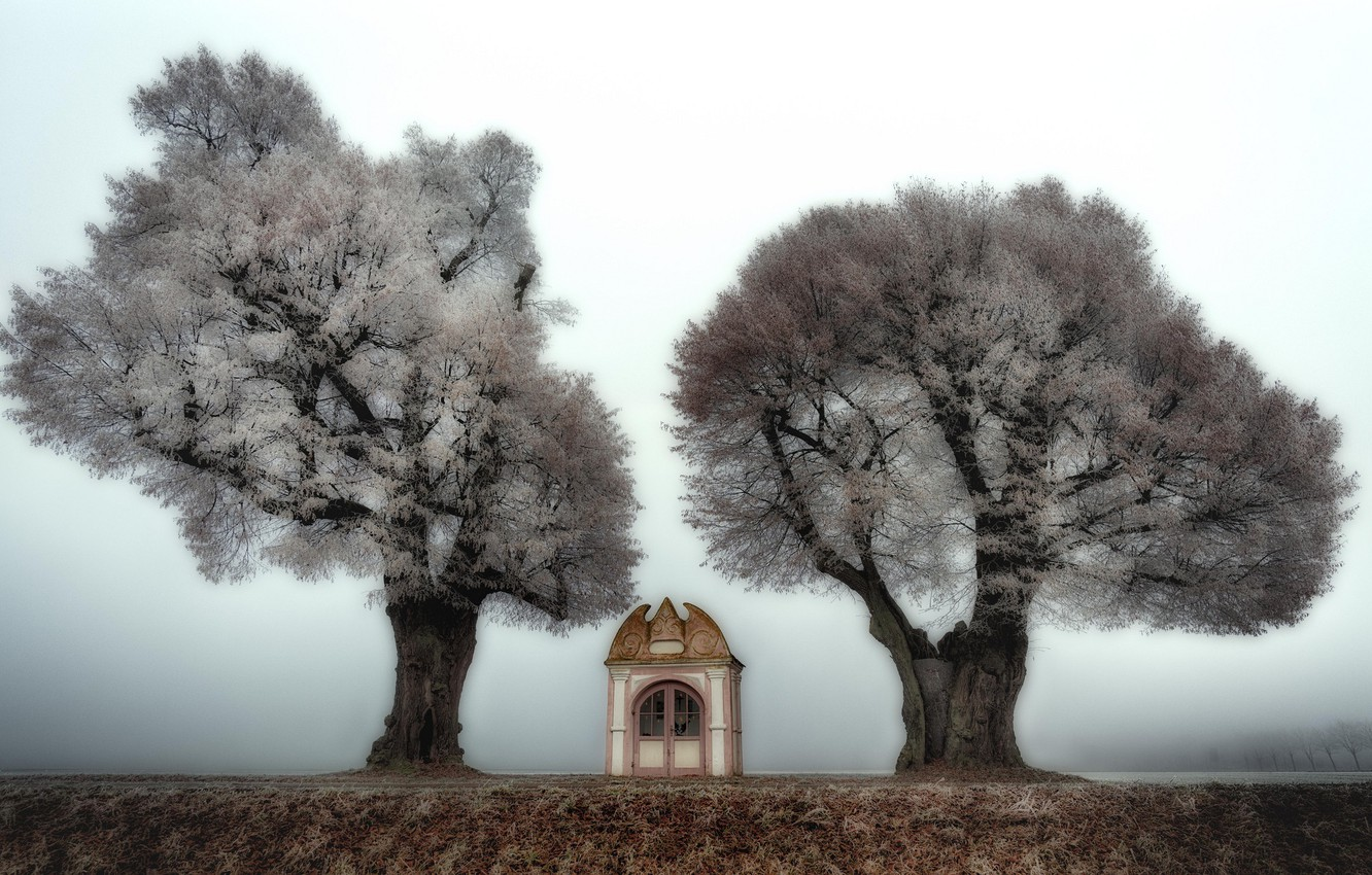 Photo wallpaper trees, nature, chapel
