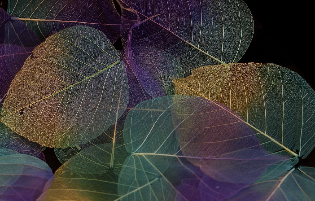 Photo wallpaper leaves, background, color, texture