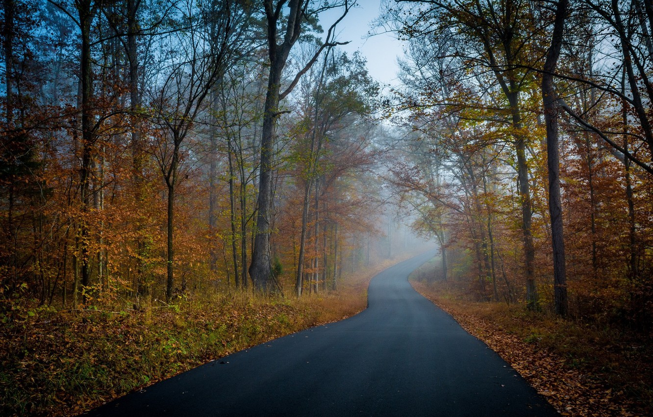 Photo wallpaper road, autumn, Trees, Forest