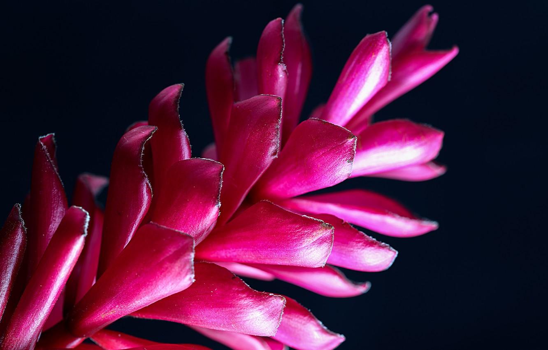 Photo wallpaper flower, macro, petals, black background, preroga