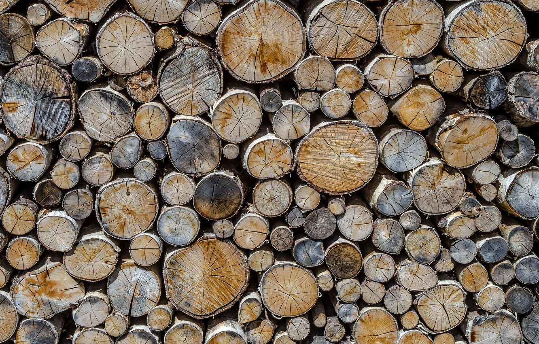 Photo wallpaper background, tree, logs