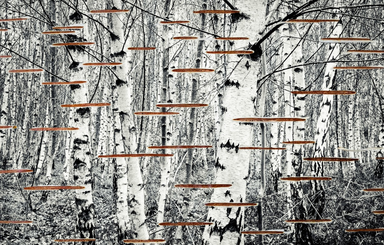 Photo wallpaper nature, background, birch