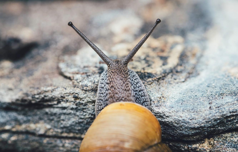 Photo wallpaper eyes, snail, sink, horns