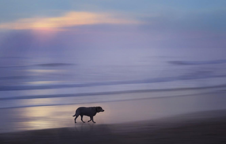 Photo wallpaper sea, sunset, dog