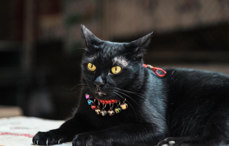 Photo wallpaper eyes, cat, black, claws