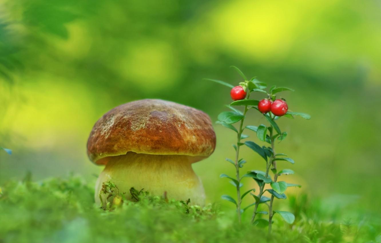 Photo wallpaper mushroom, moss, cranberries, Borovik