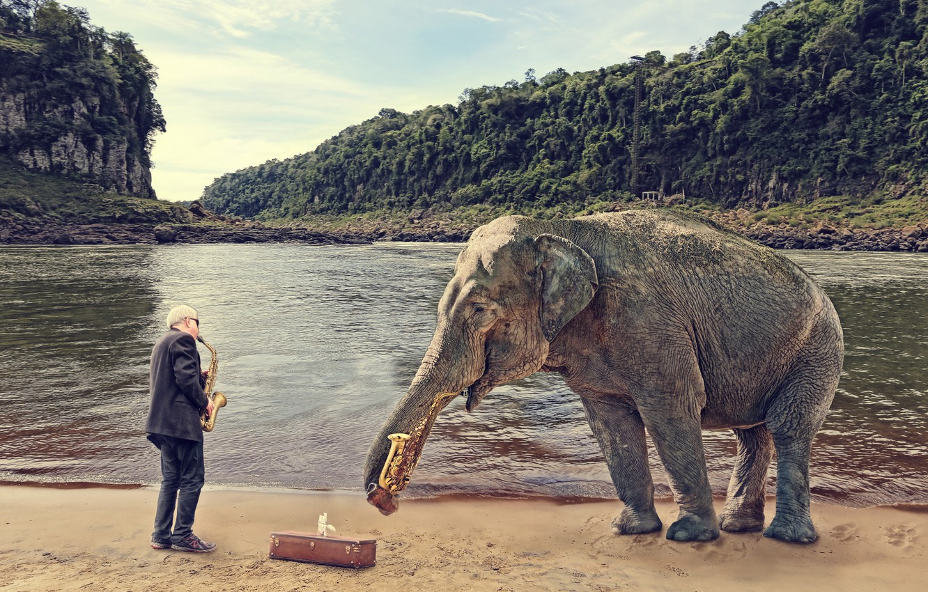 Wallpaper People Elephant Saxophone Images For Desktop Section ситуации Download