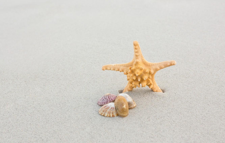 Photo wallpaper sand, sea, beach, summer, nature, shell, starfish