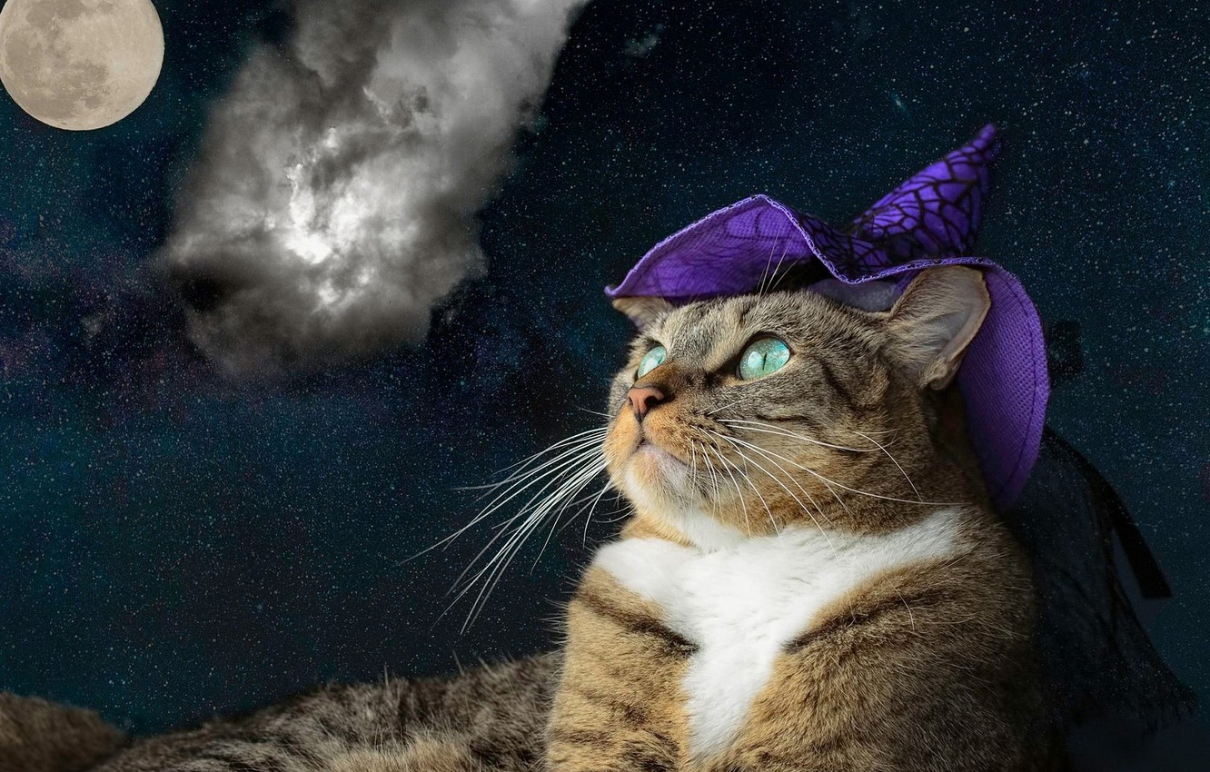 Wallpaper Cat Purple Cat Look Face Space Clouds Night Grey
