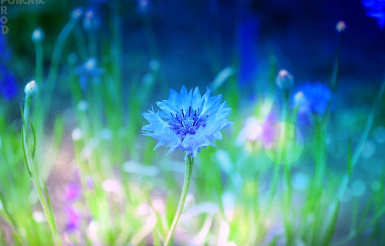 Photo wallpaper flowers, nature, flower, nice, macro flowers nature