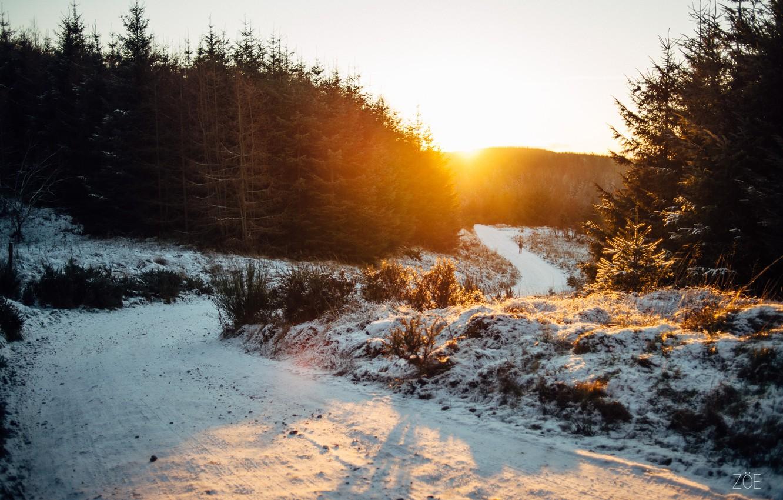 Photo wallpaper winter, road, the sun, snow, people, tree, walk, walks
