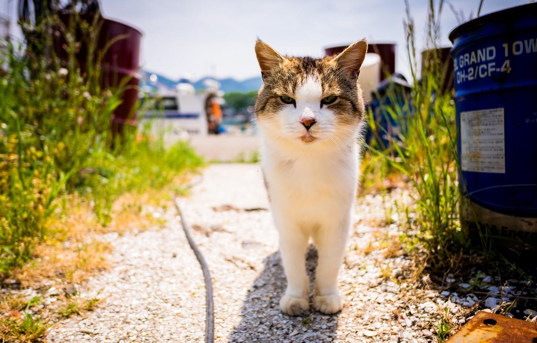 Photo wallpaper summer, look, cat