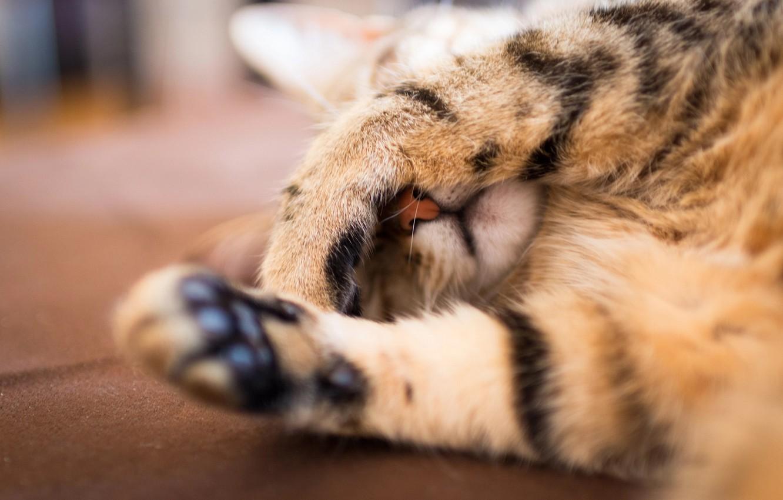 Photo wallpaper cat, cat, paw, focus, paws