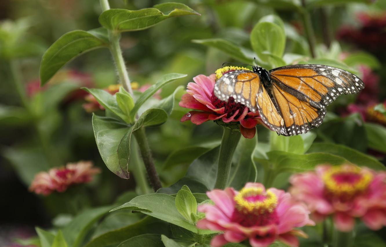 Photo wallpaper nature, butterfly, Flower