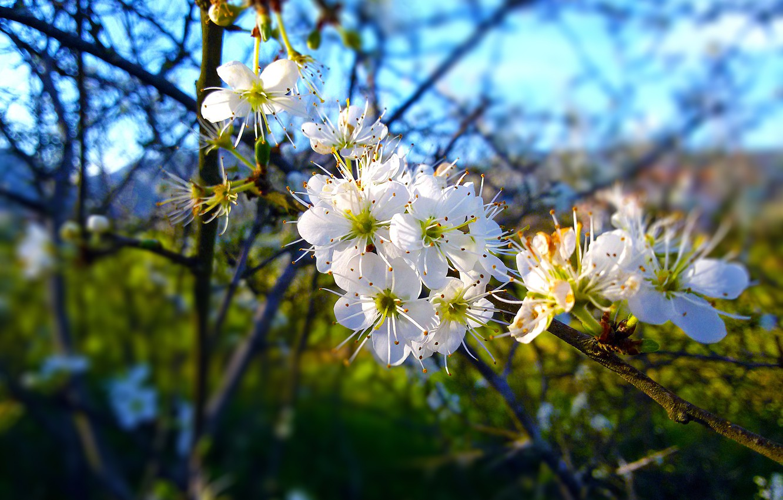 Wallpaper Spring Greece Blossom Halkidiki New Life