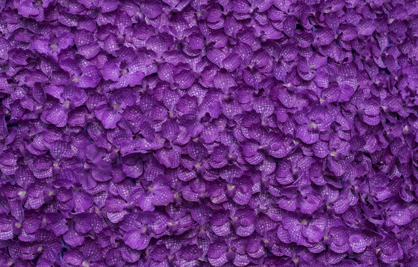 Purple Wallpaper Images Of Flowers