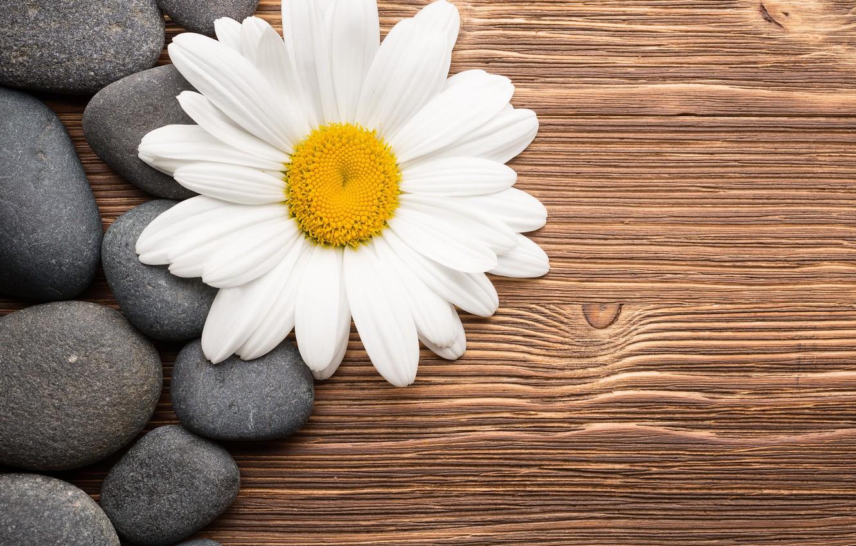 Photo wallpaper flower, stones, Daisy, wood, camomile