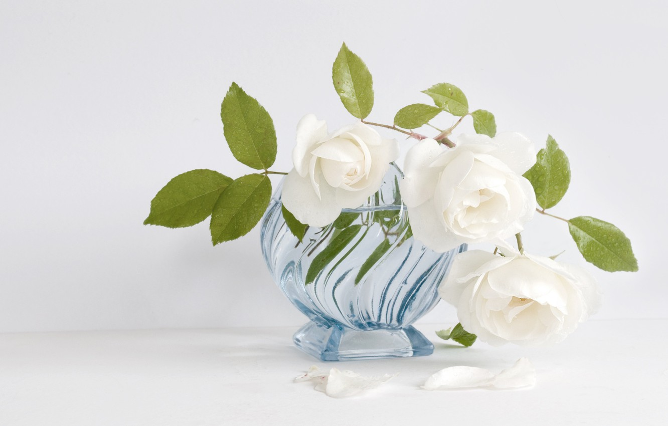 Photo wallpaper white, roses, vase