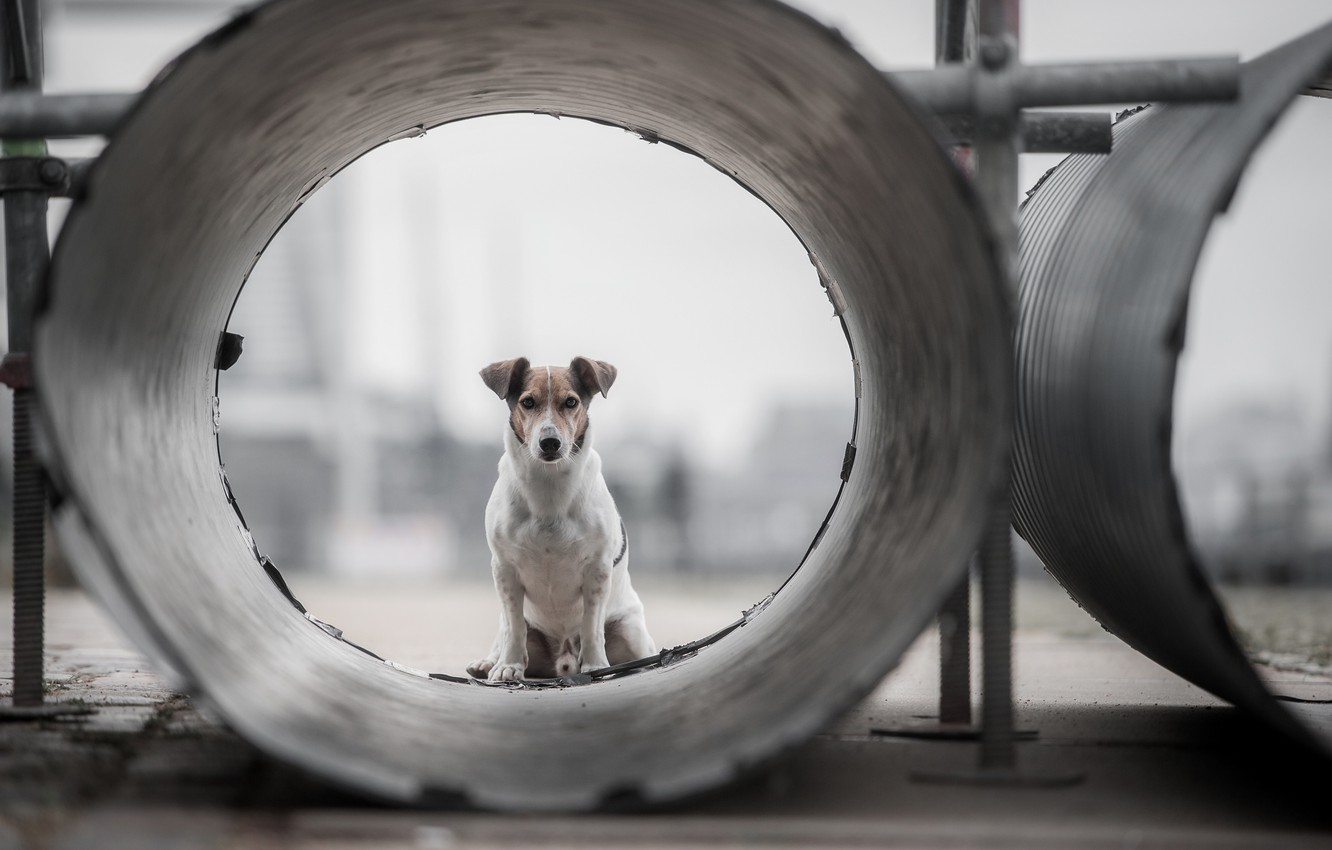 Photo wallpaper look, each, pipe, dog