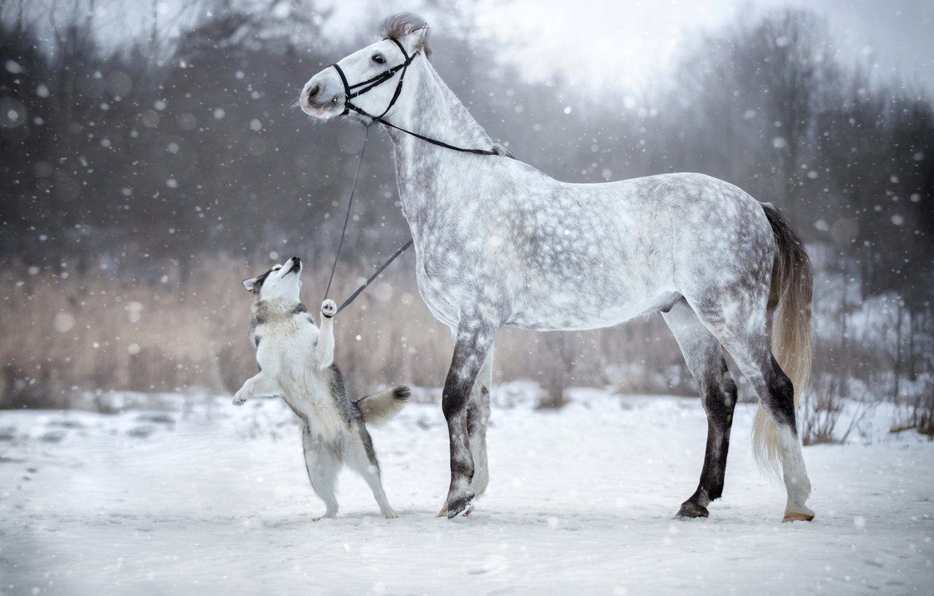 Wallpaper Winter Snow Horse Dog Bridle Images For