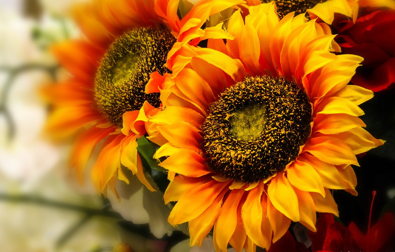 Photo wallpaper macro, flowers, yellow, sunflower, flowering