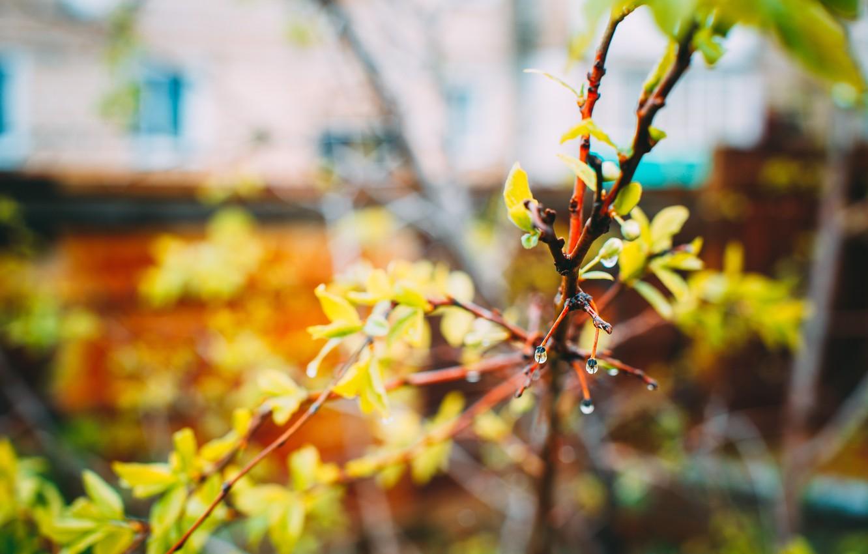 Photo wallpaper summer, flowers, nature, spring, beautiful