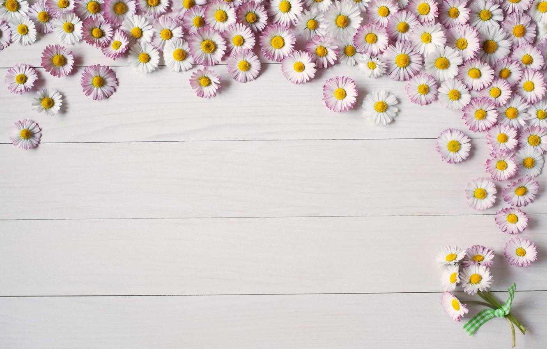 Photo wallpaper background, Board, summer, flower, pink, Daisy
