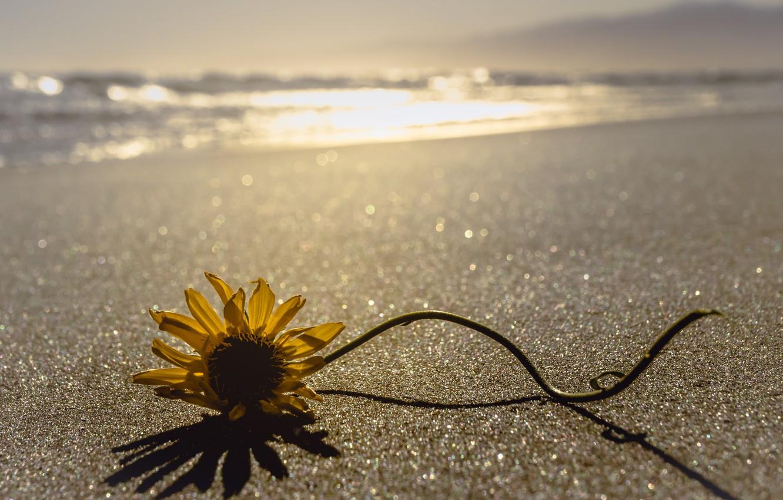 Photo wallpaper sea, flower, shore