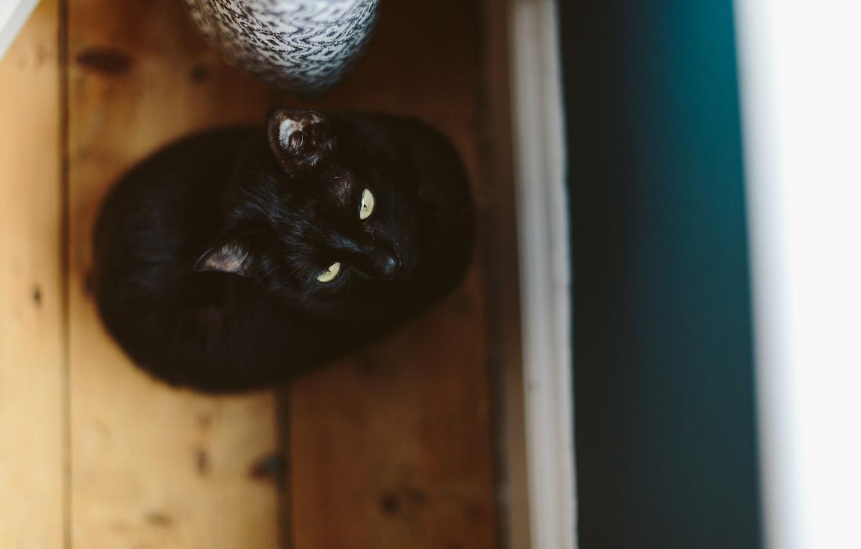 Photo wallpaper cat, cat, black