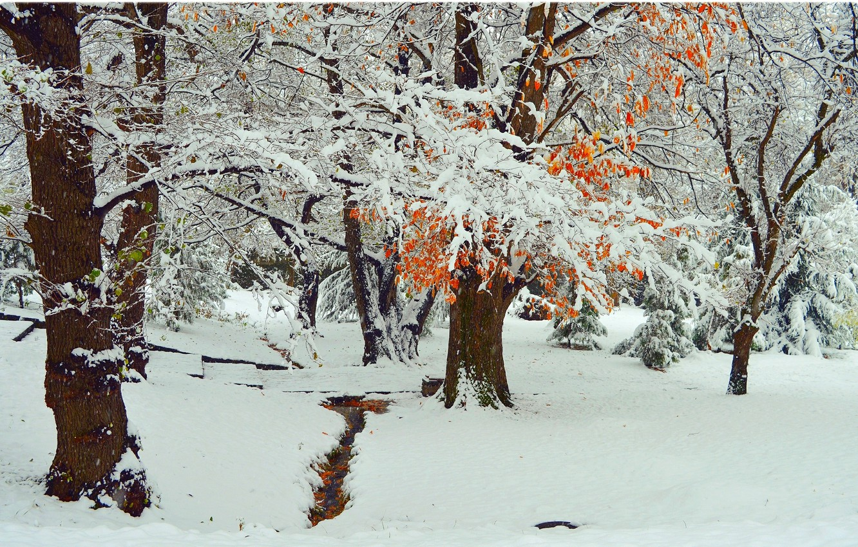 Photo wallpaper Winter, Trees, Snow, Park, Frost, Winter, Frost, Park, Snow, Trees