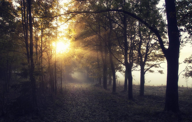 Photo wallpaper light, fog, morning