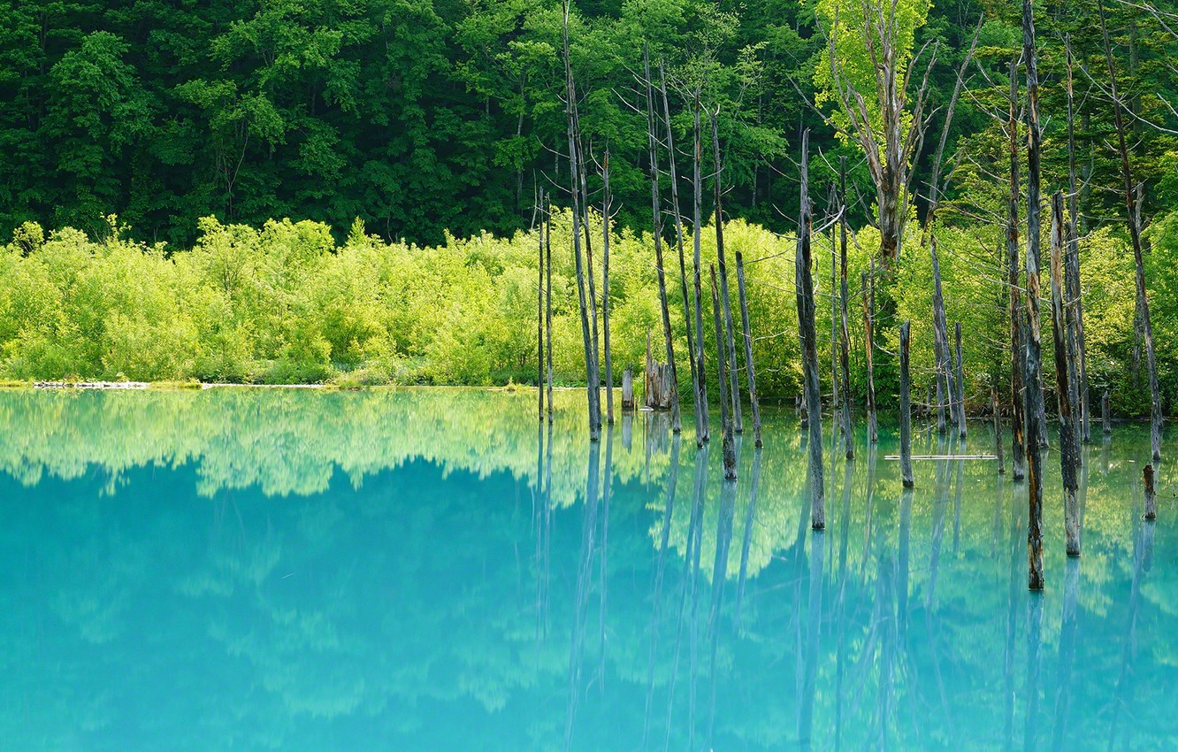Photo wallpaper forest, water, reflection, trees