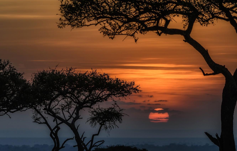 Wallpaper The Sun Trees Sunset Africa Kenya Reserve Masai Mara