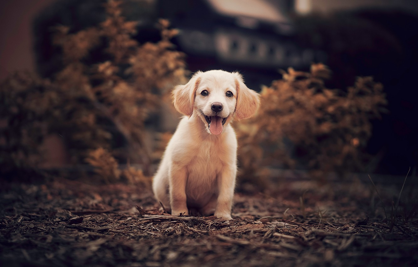 Photo wallpaper nature, puppy, doggie
