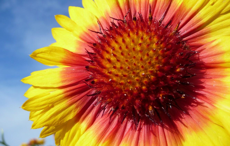 Photo wallpaper flower, summer flower, hana, by ho4hoj