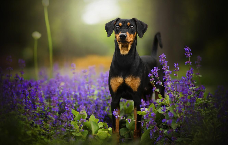 Photo wallpaper flowers, dog, bokeh, Tinkerbell